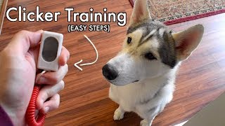 Clicker Training For Your Husky! (Easy Steps)