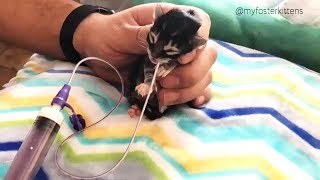 Rescue Newborn Kitten Who Was Frozen Solid Grows Up To Be Strong And Feisty