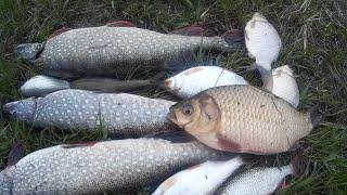 С супругой на рыбалку джиг выручил как всегда щука порадовала