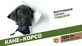 Воспитание щенка. Чем кормить собаку - YouTube
