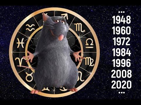 Год крысы характеристика. Крыса год.