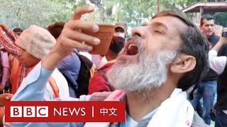 肺炎疫情:喝牛尿抗疫?印度教信徒親身嘗試- BBC News 中文