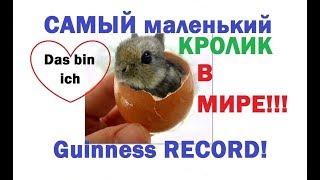Рекорд ГИНЕССА. Самый маленький КРОЛИК в МИРЕ. Уникальный кролик