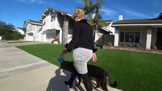 Rescue Dog Is Scared & DOES NOT Socialize With Other Dogs / Fear Based Reactive Dog Aggression