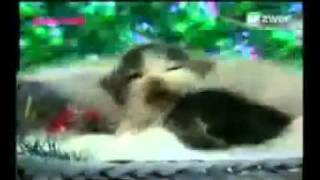 Paduan suara kucing