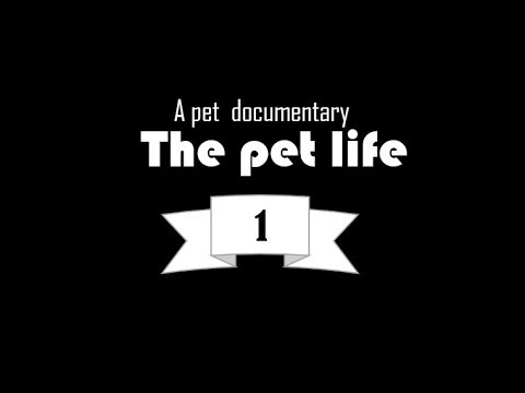 the pet life, a small documentary about our pets.