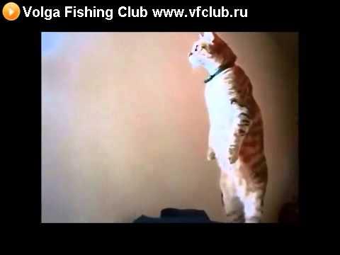 Видео как кот стоит под гимн россии