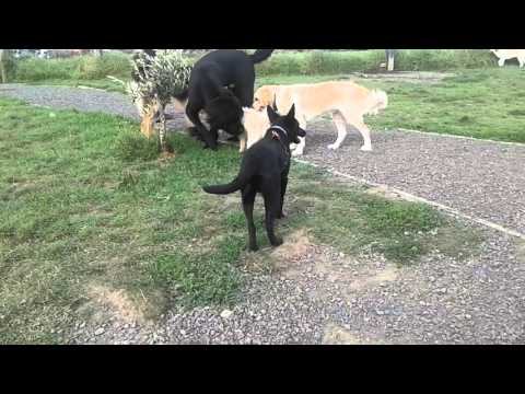 Various dog breeds socialising