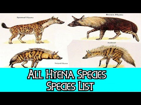 All Hyena Species - Species List