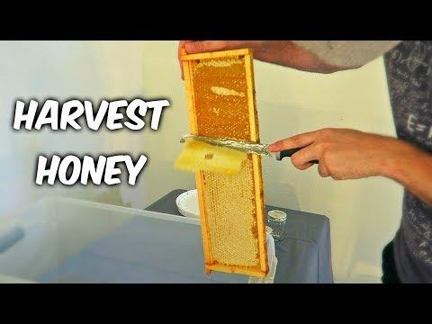 Harvest Honey - Part 1