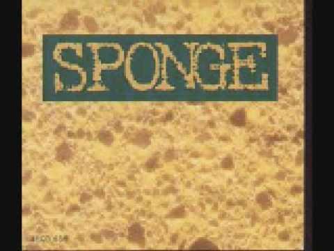 Sponge -
