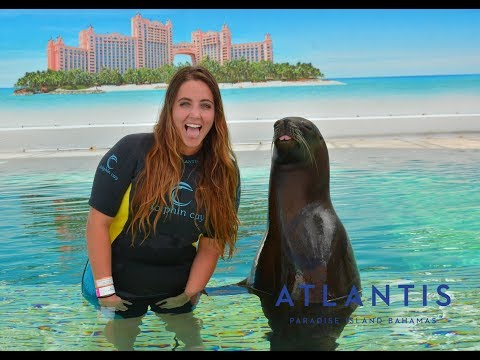 Swimming With Sea Lions at Atlantis, Paradise Island | Carni