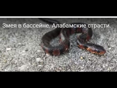 strasti-basseyne-video