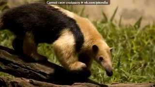 Млекопитающие под музыку музыка из фильма шаг вперёд     современная классика D   Picrolla1