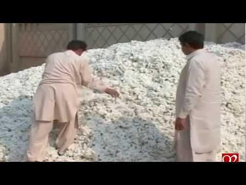 Karachi: Increase in prices of cotton recorded on local market - 04 November 2017 - 92NewsHDPlus