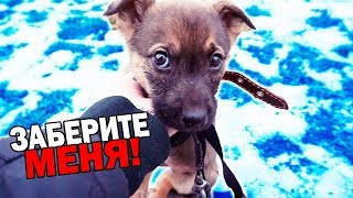 Rescue the puppy. The dog is looking for a home / SANI vlog