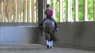 Cloverlea Dressage Sale Horse--Uno