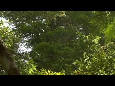 [10 Hours] Jungle with Light Rainfall - Video & Soundscape [1080HD] SlowTV