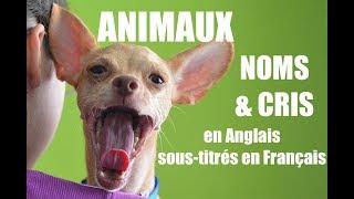 Noms et Cris des Animaux - Anglais, sous-titrés Français - Baby Bilingue