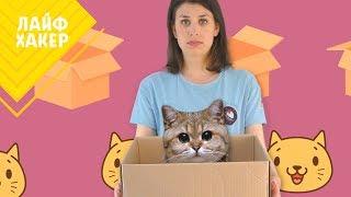 Почему кошки любят коробки 😻