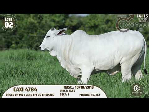 LOTE 02   CAXI 4784