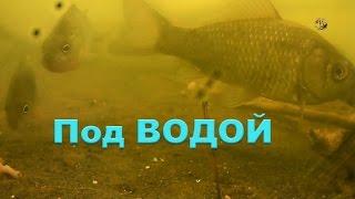 На Рыбалке. Под водой, ловил поплавочной удочкой. Подводная съемка. Поклевки. Fishing. поплавок(На Рыбалке. Под водой, ловил поплавочной удочкой. Подводная съемка..….((Мой канал- это (в основном) канал ЛЮБИ..., 2016-05-29T15:02:47.000Z)