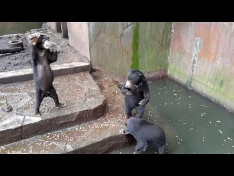 Bandung Zoo: Starving sun bears and dirty cages #horrificzoo