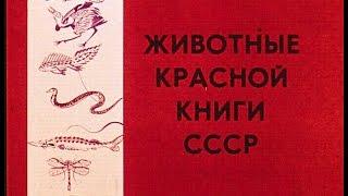 Диафильм Животные Красной книги СССР