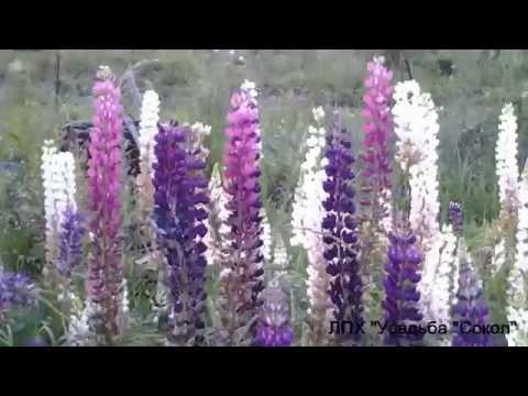 Морозостойкие неприхотливые многолетники для цветников в