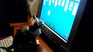 Кот хочет сам разложить пасьянс