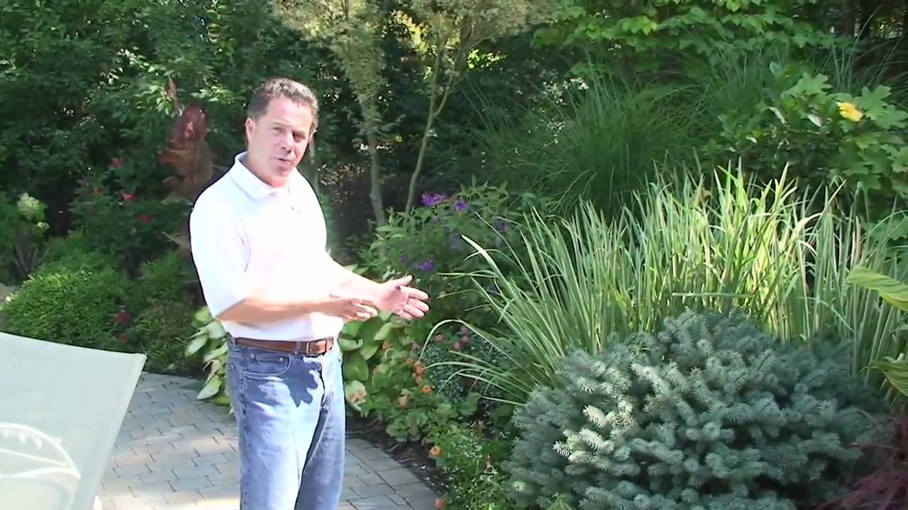 Deer resistant plants nj winter garden plants how to select winter plants youtube - Gardening mistakes maintaining garden winter ...