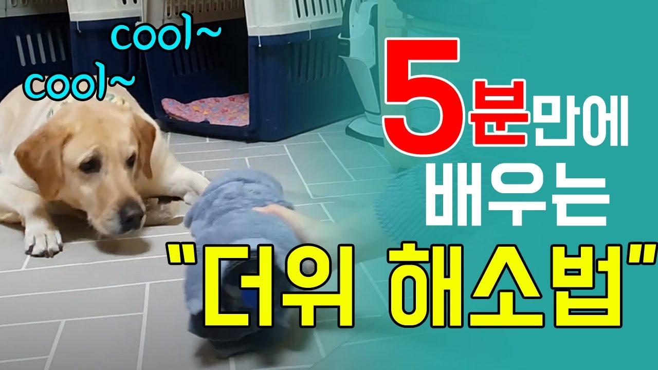 강아지 더위를 확~ 날려주는 3가지 꿀팁!