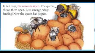 Bumble Bee Queen