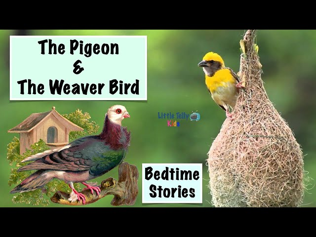 The Pigeon & The Weaver Bird || Bedtime Stories || Moral Stories || Peaceful & Relaxing || Storytime