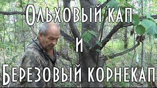 Ольховый кап и Березовый корнекап
