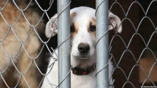 Грустное видео про животных/Не бросай их