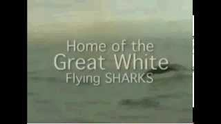 great white shark breaching for sea lions   jaws on the attack   shark week