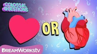 "Where Did The ""Heart Shape"" Come From? 