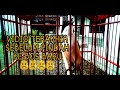 Cendet Jatim Rawatan Dari Muda  Mp3 - Mp4 Download