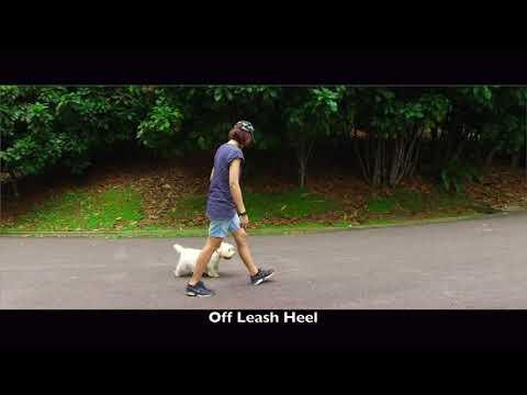 Private Seminar Singapore | Dog #2, Joser  | Celebrity Dog Trainer Nick White