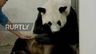 Belgian zoo welcomes birth of rare giant panda twins