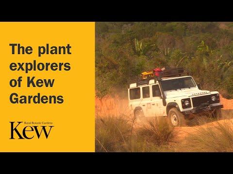The plant explorers of Kew Gardens