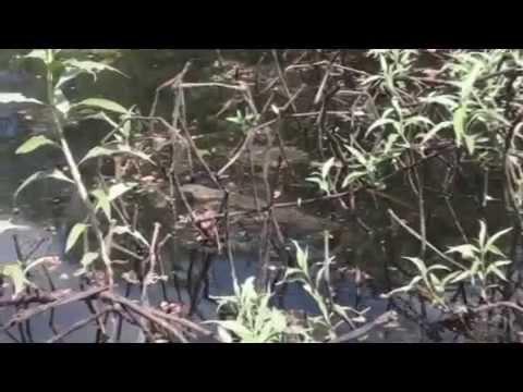 Snake Whisperer Episode 12: Monitoring the Varanids