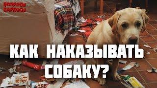 Как наказывать собаку? Можно ли бить? Как хвалить собаку?