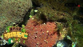 [正大综艺·动物来啦]以下哪个部位是硬珊瑚具有的| CCTV