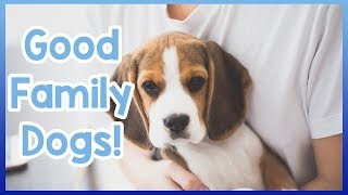 The Best Dog Breeds for New Families! Top 5 Dogs for Families! - Ha...