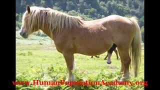 "Sex & Image Of A ""Horse"" (馬) In Human Programs"