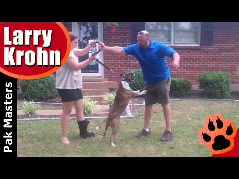 How To Train Aggressive Dogs 'With Pak Masters Dog Training Of Nashville'