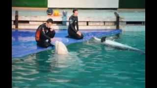 Дельфинарий в Санкт-петербурге(Дельфинарий в Санкт-петербурге., 2012-10-21T08:03:07.000Z)
