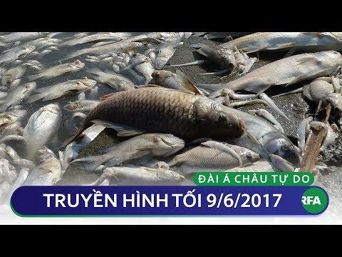 Truyền hình tối 9/6/2017 | RFA Vietnamese News